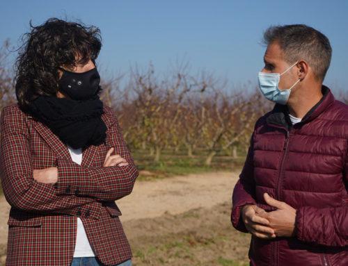 La Ribera d'Ebre prova el cultiu de kiwi com a alternativa als presseguers, afectats per la sharka