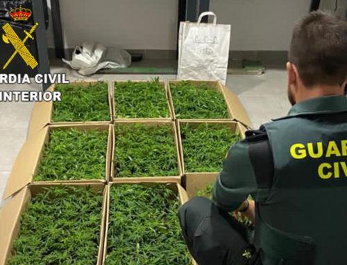 Detinguts dos homes a Vinaròs quan transportaven 9 caixes amb planters de marihuana