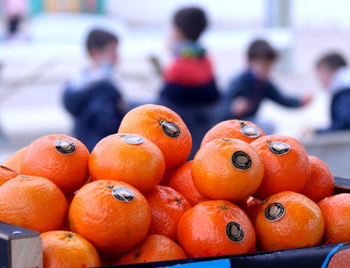 El programa fruita a les escoles donarà enguany una bossa de mandarines ebrenques a 254.000 alumnes de Catalunya