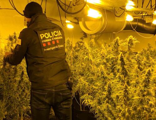 Una investigació iniciada pels Mossos a Terres de l'Ebre desarticula un grup criminal que conreava marihuana al Camp de Tarragona