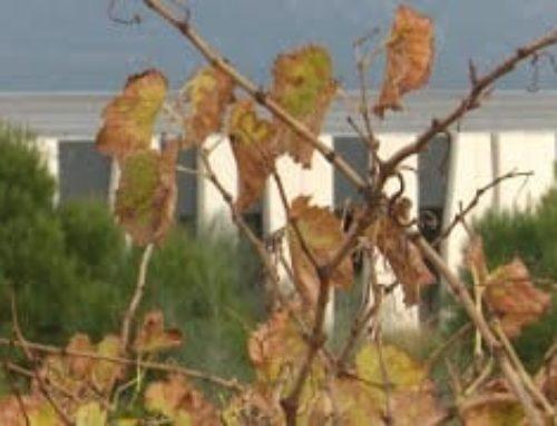 La DO Terra Alta, el motor econòmic d'un paradís vitivinícola