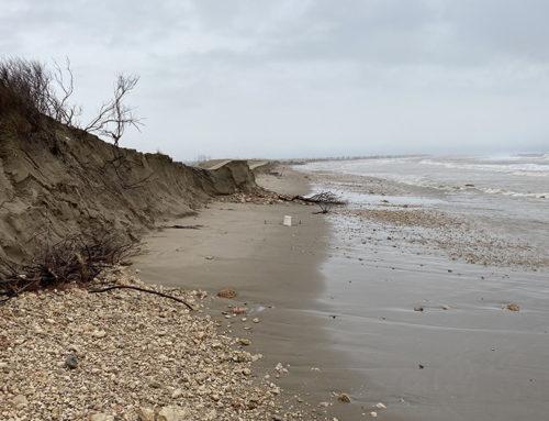 Seat i el Grup Volkswagen destinaran un milió d'euros a la restauració de Riet Vell i zones costaneres del delta de l'Ebre afectades pel Glòria