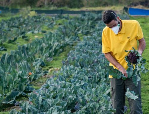 Unió de Pagesos insta a tenir en compte les especificitats del sector agrari en el programa de vacunació contra la covid-19