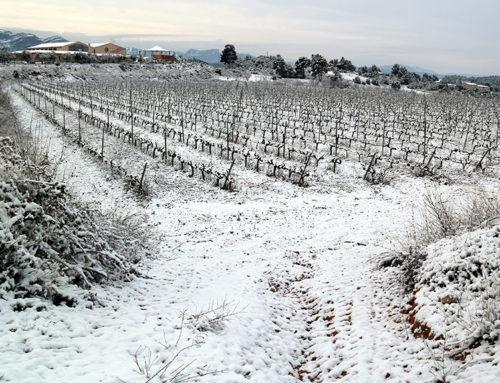 Els viticultors asseguren que la nevada serà beneficiosa per la vinya