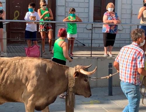 La Generalitat arxiva la denúncia dels animalistes per una passejada de mansos a Santa Bàrbara