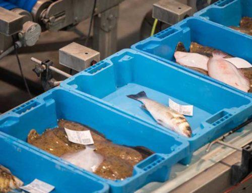 Creix el consum de peix durant la pandèmia