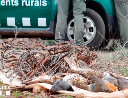 Enxampen in fraganti una persona que col·locava trampes tipus cep per caçar ocells