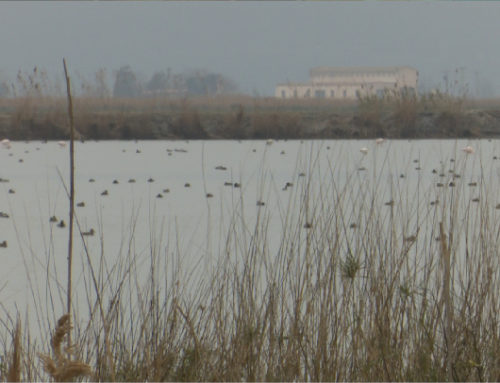 Les societats de caçadors del Delta fan balanç de la temporada marcada per la pandèmia i el canvi climàtic