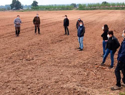 Tècnics d'Agricultura i representants del sector fruiter de la Ribera d'Ebre visiten els camps de les futures plantacions de kiwi