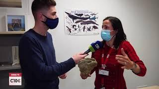 Continua la lluita per salvar les últimes nacres existents a la costa mediterrània espanyola