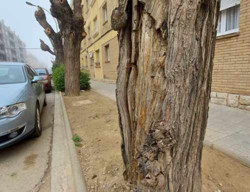 Dilluns comencen les tasques d'arranjament d'escocells i de replantada d'arbrat a l'avinguda de Colom, a Ferreries