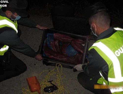 Intercepten 28,5 kg de tonyina vermella en època de veda a Riumar