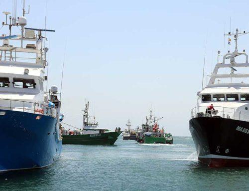 Les embarcacions de Balfegó salparan dissabte per iniciar la campanya de pesca de tonyina roja