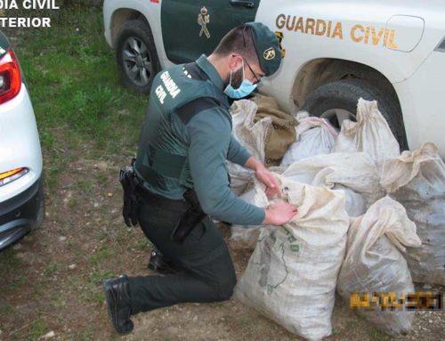 La Guàrdia Civil investiga a dues persones pel robatori de garrofes a Godall