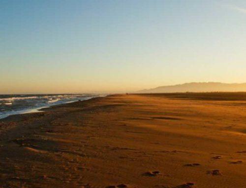 L'Ajuntament encomana a Amposta Serveis Municipals el control de la platja d'Eucaliptus