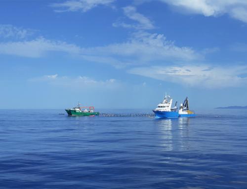 Balfegó finalitza la campanya de captura de 2.410 tones de tonyina en sis dies