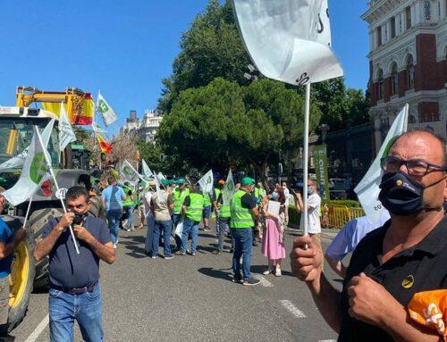 Unió de Pagesos es manifesta davant del ministeri d'Agricultura a Madrid per exigir solucions pel sector de la vinya i el vi