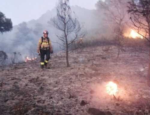 Els bombers donen per controlat l'incendi forestal de Móra d'Ebre després de cremar 4 hectàrees