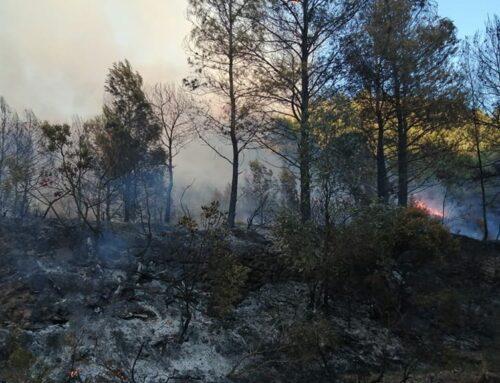 Vint-i-quatre dotacions de bombers lluiten contra el foc a Móra d'Ebre