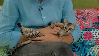 L'Illa dels Flamencs i DeltaRescat volen que adoptis un gat