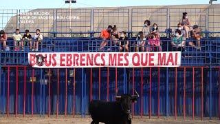 Festes Majors de l'Aldea 2021: Tarde de Vaques i Novillo Cerril