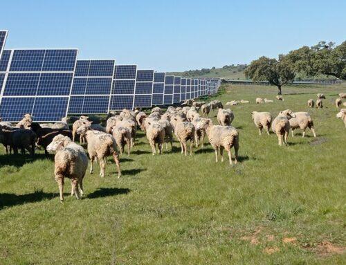 Agrivoltaica, energia solar i agricultura en la mateixa superfície