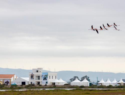 Més de 2.500 persones visiten el Delta Birding Festival en la seua setena edició