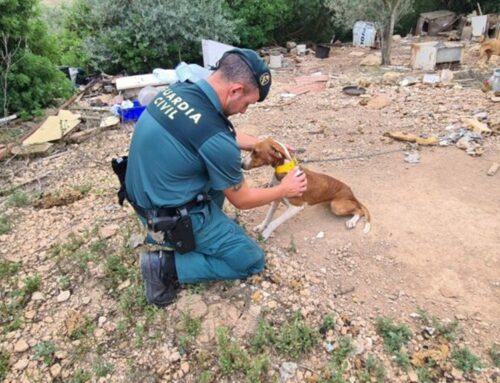 La Guàrdia Civil investiga un veí de l'Ampolla per diversos delictes de maltractament animal