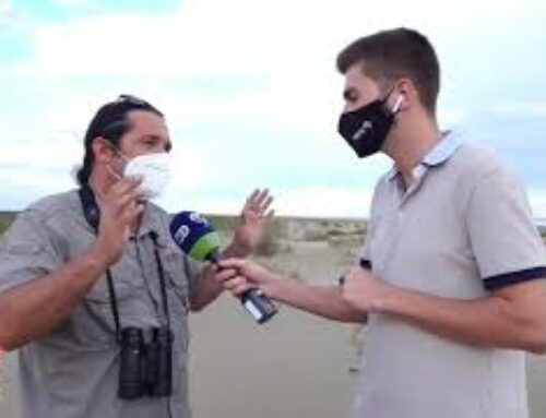 La regulació d'aforament a les platges del Delta redueix l'impacte humà sobre la biodiversitat